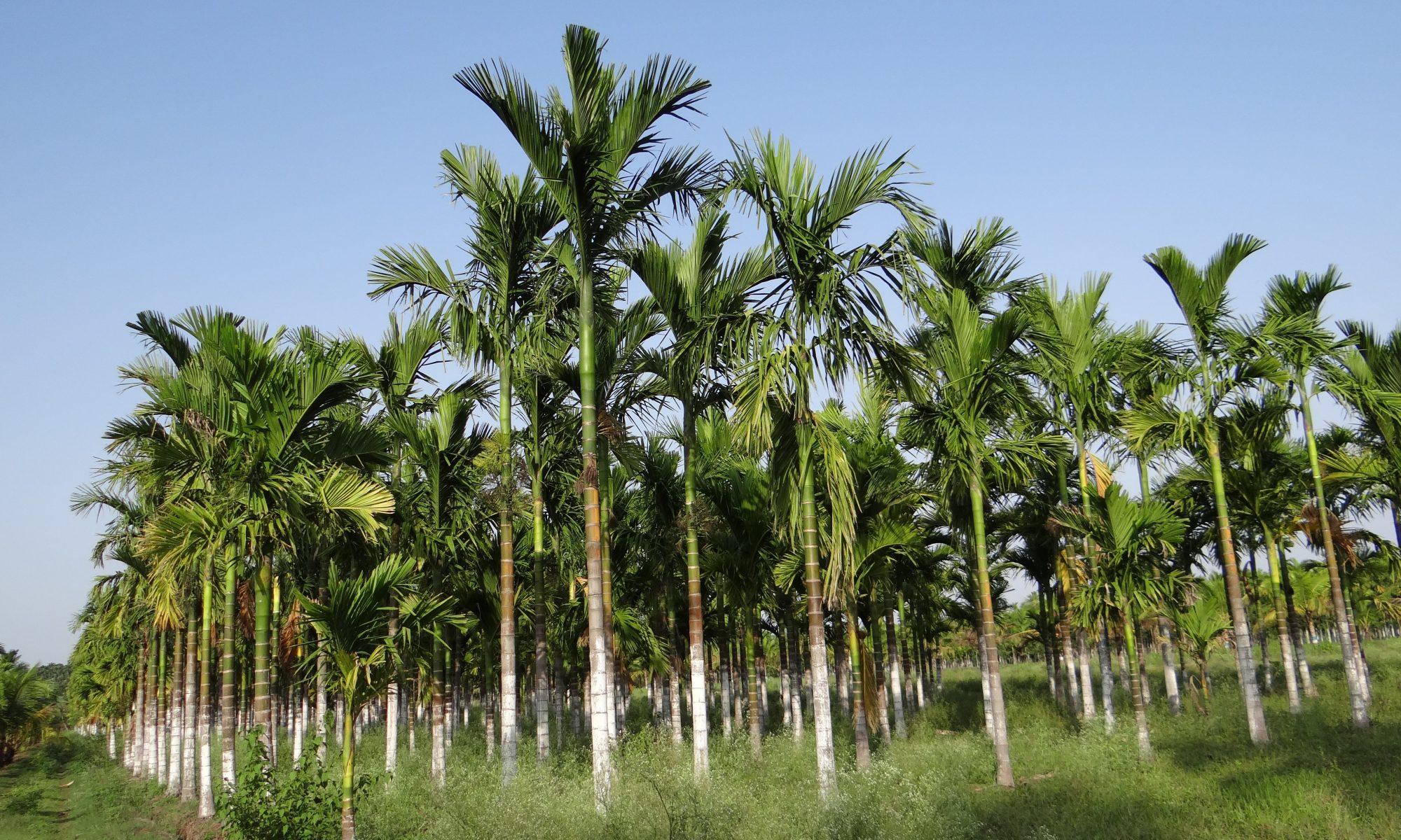 tree-plant-botany-agriculture-flora-vegetation-1102671-pxhere.com
