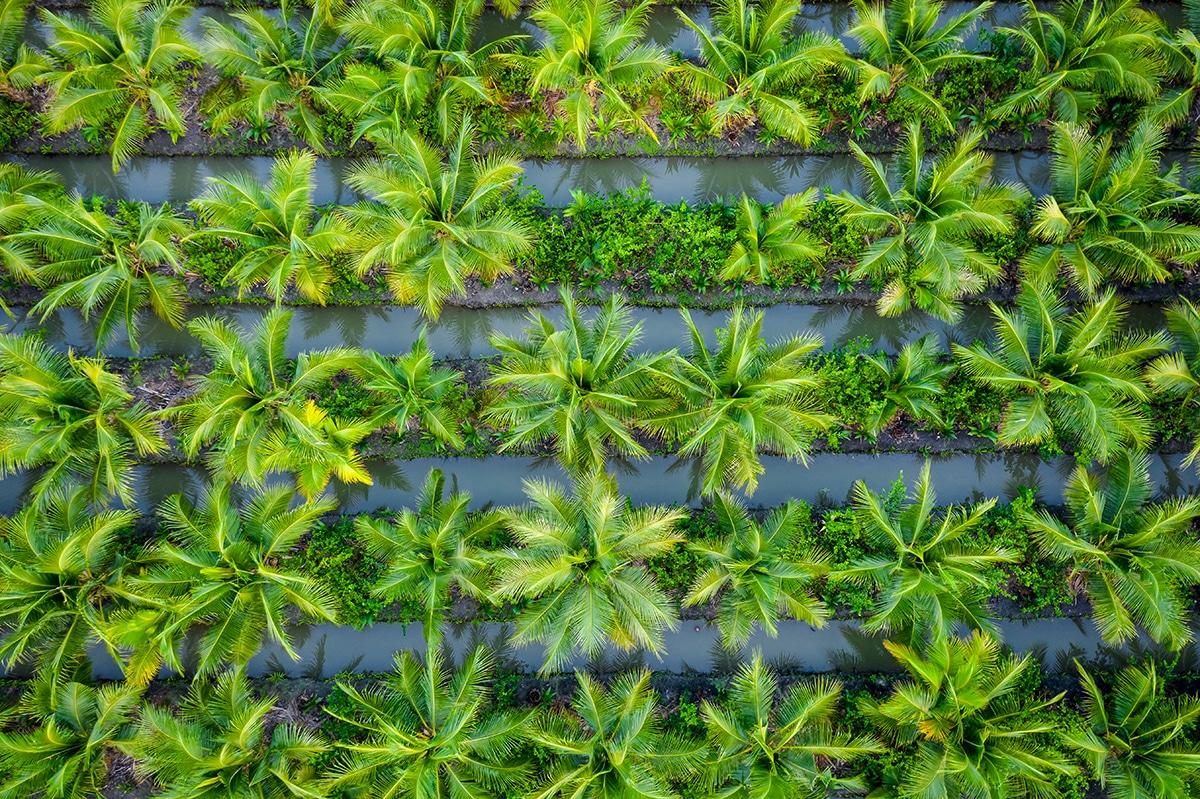 ¿Qué es el aceite de palma y para qué sirve?